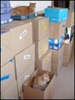 Boxbrosla packs everything but the cats
